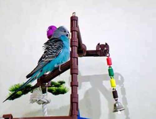 Tips For Keeping Your Pet Bird Entertained