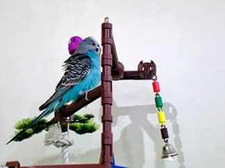 Pet Bird with Toys