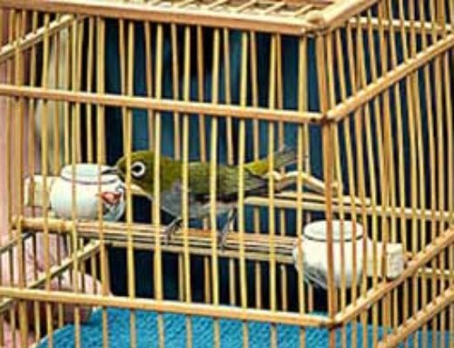 How To Choose The Right Bird Cage