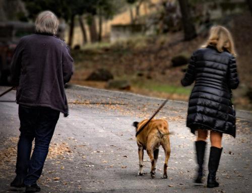 Understanding Your Dog's Individual Walking Needs