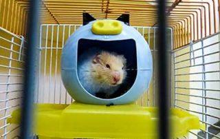 hamster in hamster ball