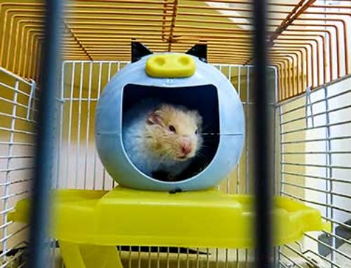 Choosing Toys For Hamsters