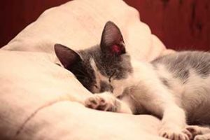 pet cat sleeping